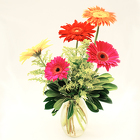 Graceful Gerberas from Casey's Garden Shop & Florist, Bloomington Flower Shop