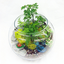 Terrarium from Casey's Garden Shop & Florist, Bloomington Flower Shop