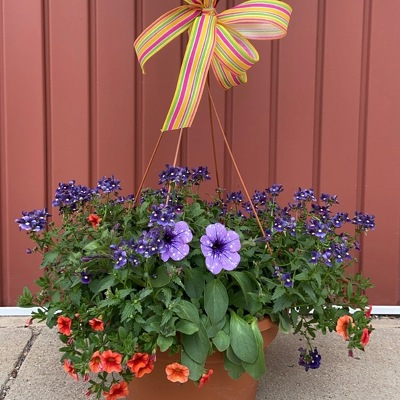 Deluxe Hanging Basket : Mixed Annuals from Casey's Garden Shop & Florist, Bloomington Flower Shop