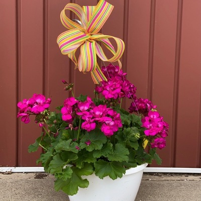 Hanging Basket : Annual Flowers from Casey's Garden Shop & Florist, Bloomington Flower Shop