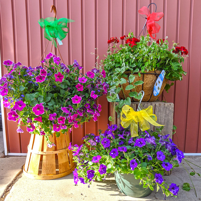 Hanging Basket of Annuals from Casey's Garden Shop & Florist, Bloomington Flower Shop